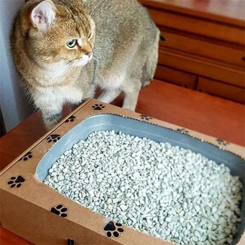 еко-туалет для котів